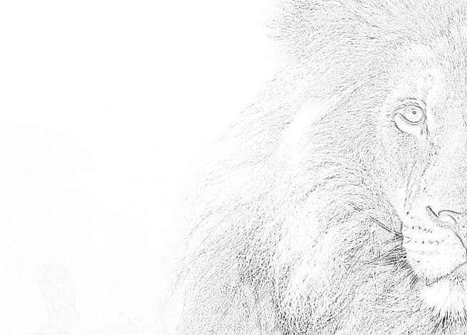 lion-04